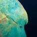 Blue Venture gallery - Erich Reboucas